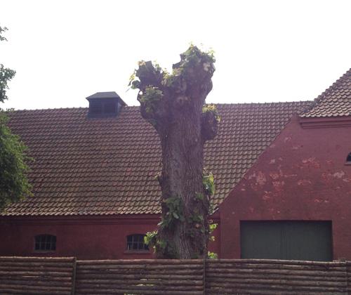 Træfældning i Odense